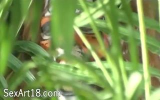 extraordinary tigers having sex